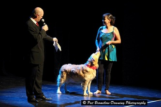 Dogs sharing the stage with dancers at a previous Dancers Love Dogs concert.